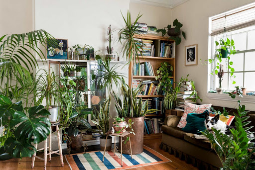 Why Plants Really Can Improve Your Mood Significantly